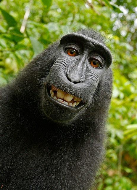 Весела маймунка